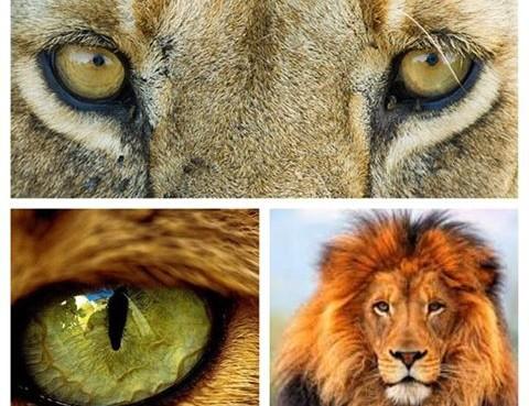 Callagy Law Lions 2
