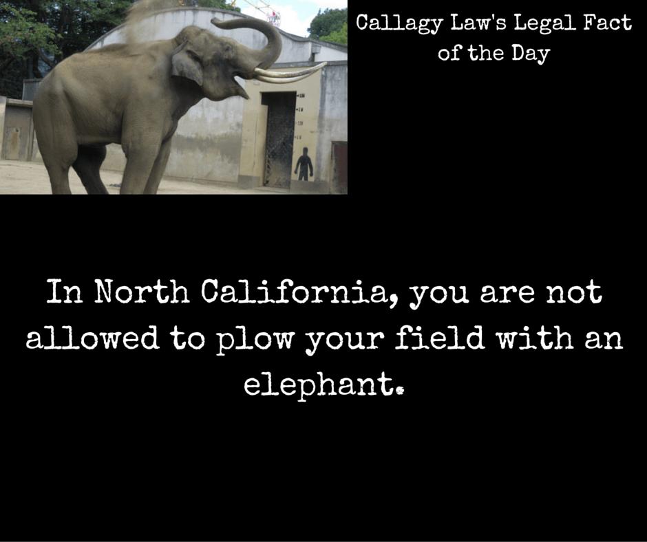 north carolina legal fact elephant callagy law