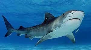 Shark Attack Selfie Callagy Law